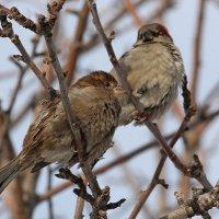 Надо место для гнезда присмотреть, пора... :: tamara kremleva