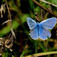 cкоро лето, бабочки...29 :: Александр Прокудин