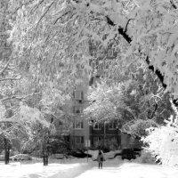 Снежная зима. :: жанна нечаева