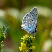 cкоро лето, бабочки...32 :: Александр Прокудин