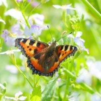 cкоро лето, бабочки...35 :: Александр Прокудин