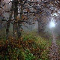 Туман. Осень развлекается. :: Volodymyr Shapoval VIS t