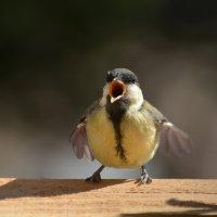 певчая ) :: linnud