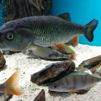В аквариуме :: Самохвалова Зинаида