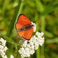 cкоро лето, бабочки...36 :: Александр Прокудин