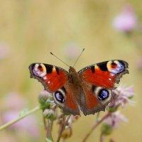 cкоро лето, бабочки...39 :: Александр Прокудин