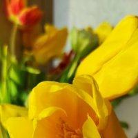 Солнечный цветок :: Светлана