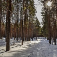 """""""я в весеннем лесу..."""" :: сергей"""