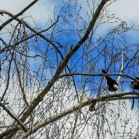 сорока-ворона... :: жанна janna