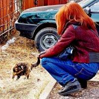 Кормёшка - трёх котят и кошки! :: Евгений