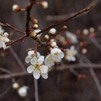 Весна ! :: Вен Гъновски
