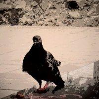 Птичье царство 20 :: Полина Куприянова