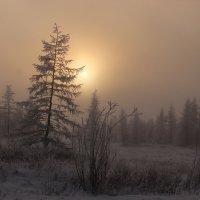 Сквозь туман :: Александр Велигура