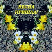 Весна пришла! :: Дмитрий Никитин