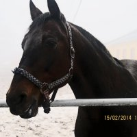 Благородная красота 4 :: Полина Куприянова