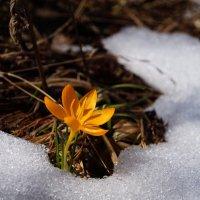 Весна ! 27 март 2021г. :: Вен Гъновски
