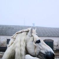 Благородная красота 7 :: Полина Куприянова