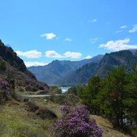 Весна в долине Катуни. :: Валерий Медведев