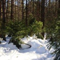 А в лесу ещё зима) :: Татьяна