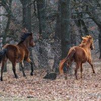 Кони, кони... :: Олег