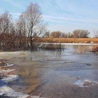 Настойчивы апрельские ручьи... :: Лесо-Вед (Баранов)
