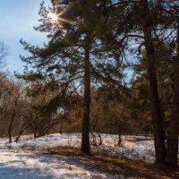 Солнечный весенний пейзаж :: Александр Синдерёв