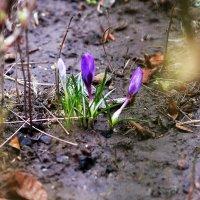 Весна! :: просто Борисыч
