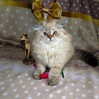 Красотка :: Ольга Митрофанова