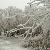 Морозный день – на ветках иней.  Деревья будто в серебре...(из А.  Зеленский) :: Петр Фролов