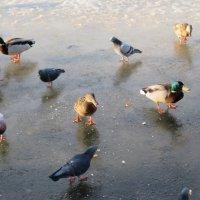 Апрель..Лёд на пруду ещё не растаял. :: Зинаида