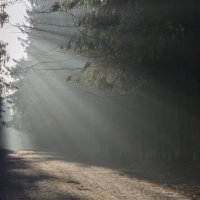 В парке туманном...... :: Юрий Цыплятников