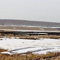 Снег отступает. :: Татьяна Перегудова