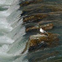 Одинокая чайка - 2. :: Евгений Кузнецов
