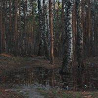 В  апрельском лесу... :: Михаил Полыгалов