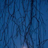 Луна запуталась в ветвях :: Вячеслав Побединский