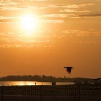 на закате.. :: Александр Довгий