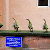 Немецкие птички :: Ольга (crim41evp)