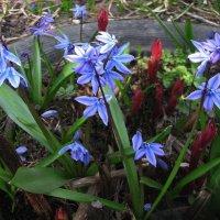 Весна в саду :: sm-lydmila Смородинская