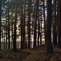 В лесу. :: Михаил Полыгалов