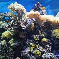 Кораллы :: Татьяна Лютаева