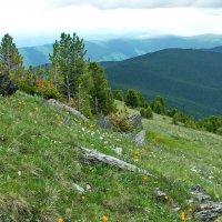 Цветочная поляна в горах :: Галина