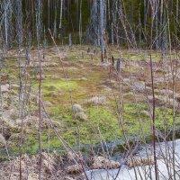 У маленького болота. :: Марина Никулина