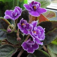 Цветы на подоконнике :: Liliya Kharlamova