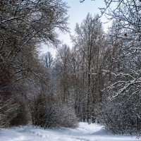 Ельниковская роща.Зима_2 :: Василий Цымбал