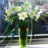 Весна идет... :: Татьяна Р
