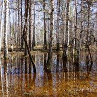 Вода, вода....кругом вода... :: Анна Суханова