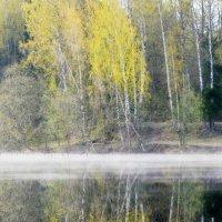 Весенняя зелень...... :: Юрий Цыплятников