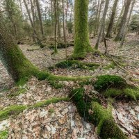 Апрельский лес :: Владимир Самсонов