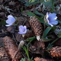 Весна в лесу :: Юрий Пучков