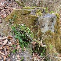 в защите леса :: Heinz Thorns